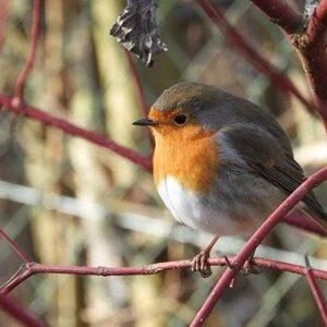 Grupenhagen-Vogel im Geaest