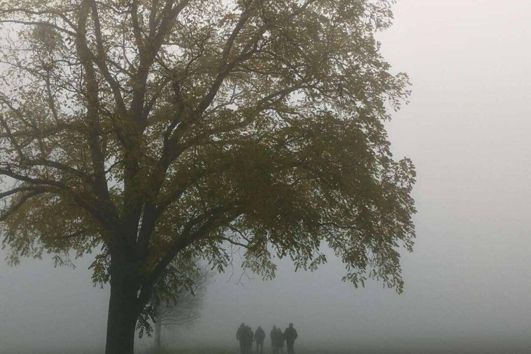 Vogelkundlicher Rundgang Baum im Nebel