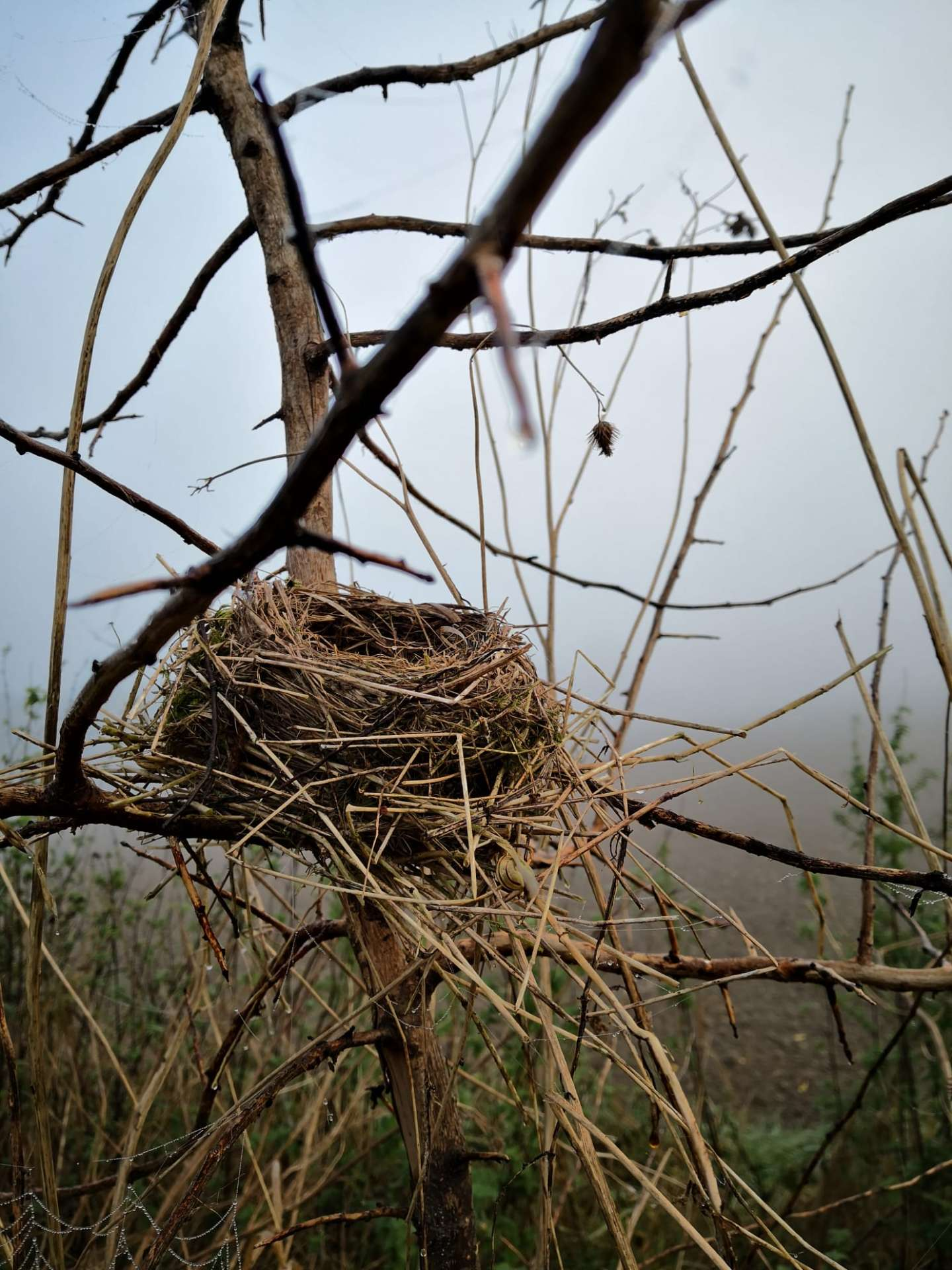 Vogelkundlicher Rundgang Vogelnest
